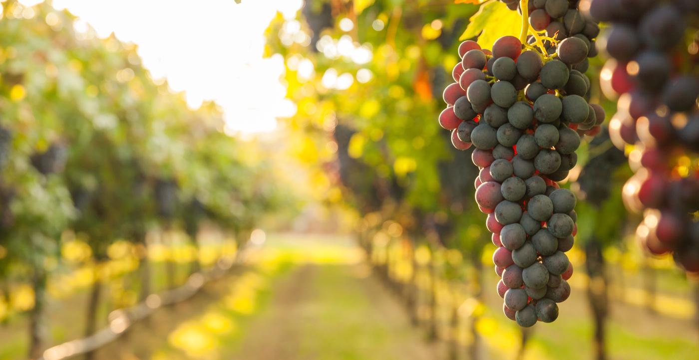 filiera-vitivinicola_web